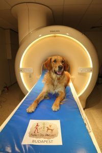 Pies Barack przy tomografie